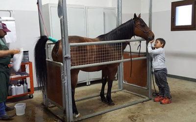 Angelo Ferrario: il dottore dei cavalli