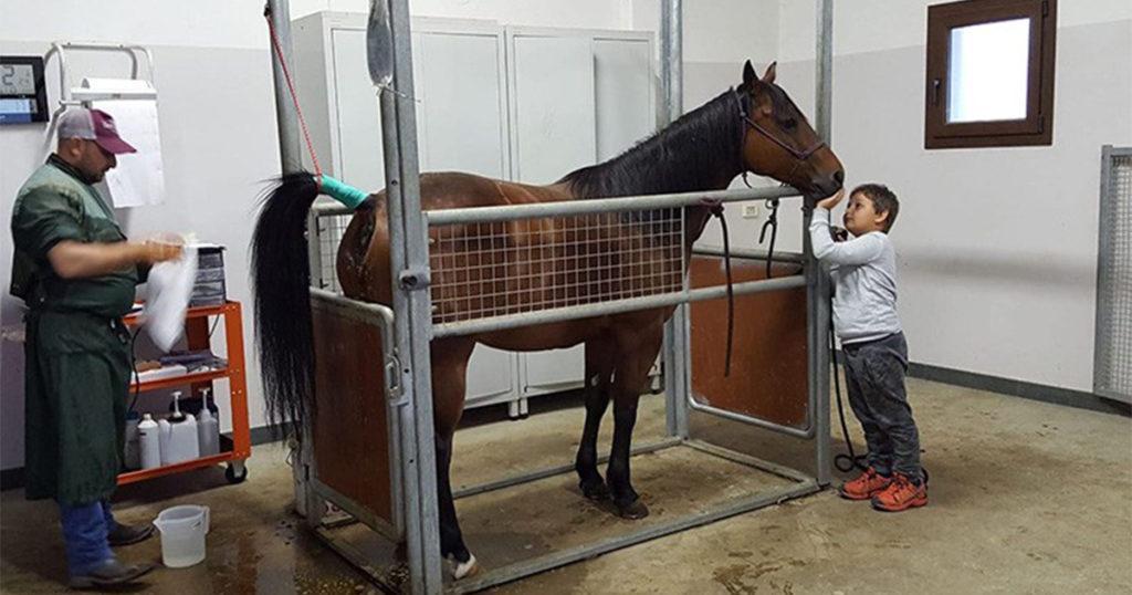 Angelo Ferrario: il dottore dei cavalli 1