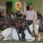 Non solo cavalli ma anche splendidi cani al Festival con Caio Farm! 1