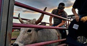 B&m cattle company