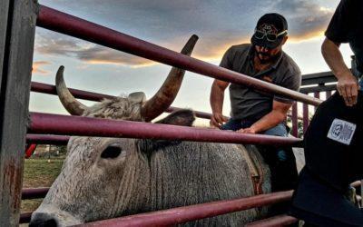 B&M Cattle Company Bucking Bulls