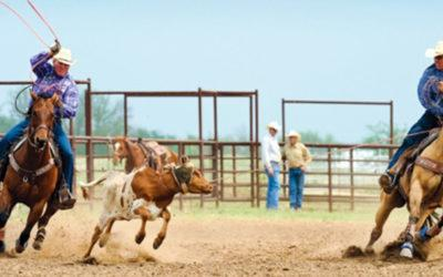 Team Roping come un vero cowboy americano !